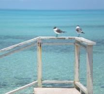 seagulls in Eleuthera