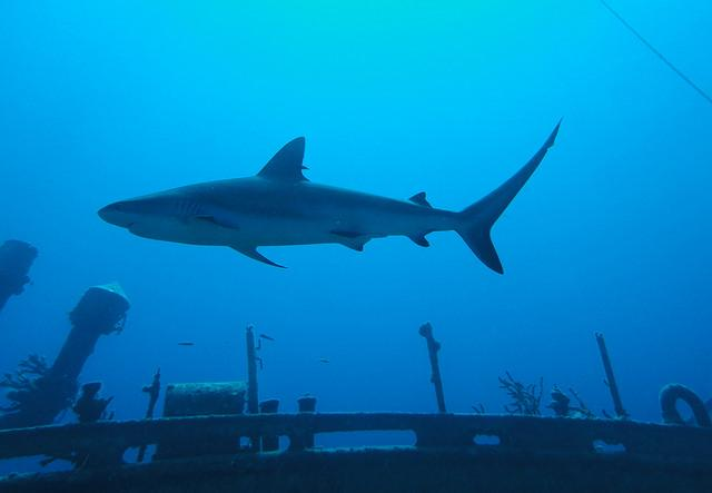 diving eleuthera